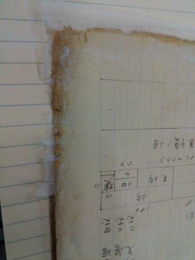 画像3: 薄葉紙スパイダー